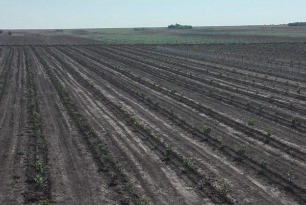 rigolovanje tla